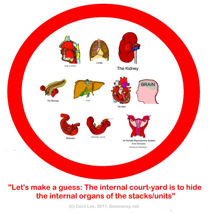 internal organs.png